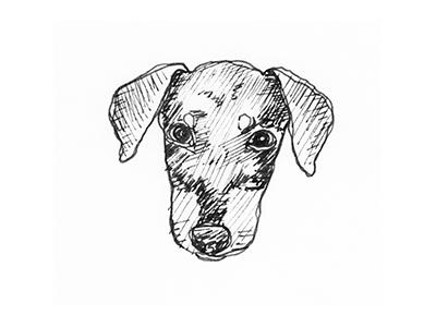 Dog Sketch illustration sketch hand drawn animal rescue dog