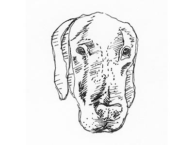 Dog Sketch animal rescue hand drawn great dane illustration sketch dog