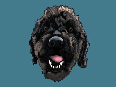 Max wacomtablet digitaldrawing dog labradoodle digitalpainting illustration