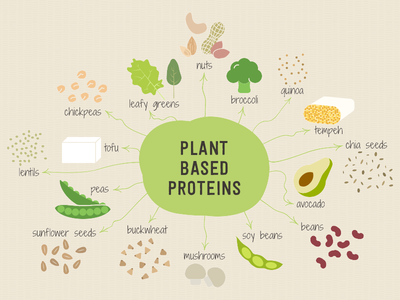 Plant Based Proteins Illustration food healthy plant proteins digital illustration illustration