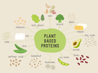 Plant Based Proteins Illustration