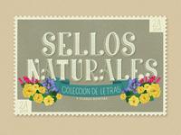Sellos Naturales. Colección de letras y flores bonitas