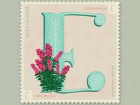 Letter E · Espumilla · #36daysoftype #SellosNaturales