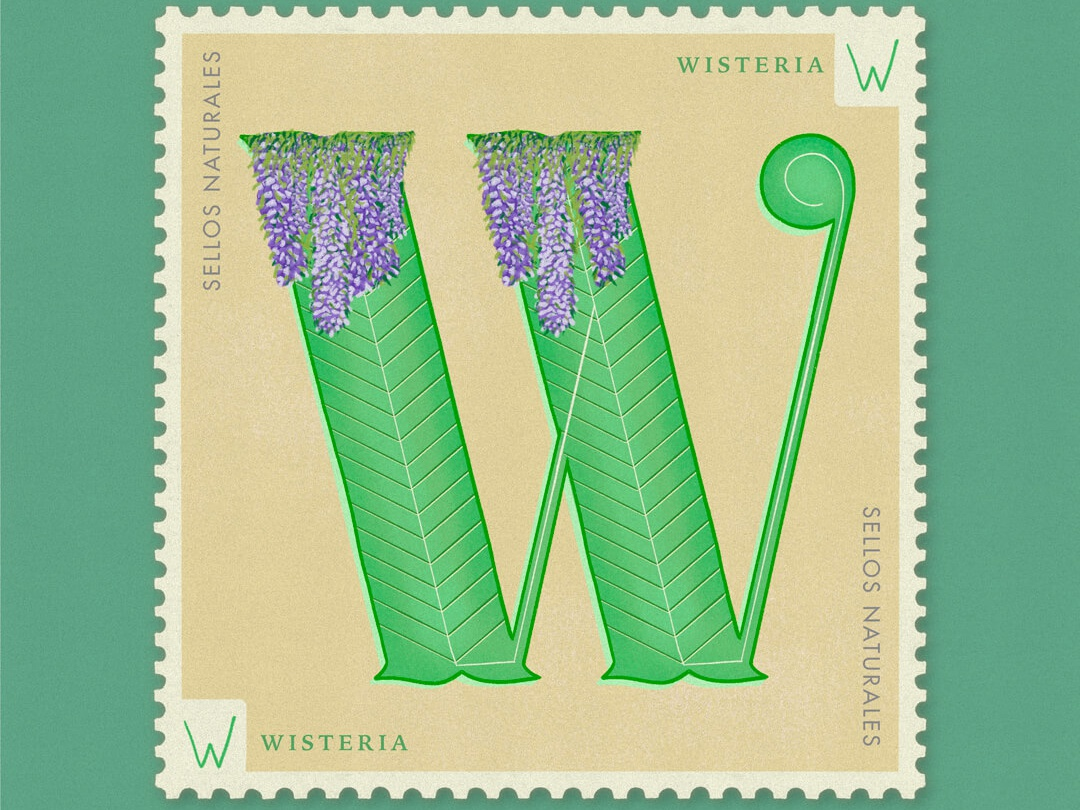 Letter W · Wisteria · #36daysoftype #SellosNaturales procreate botanical art capital letters hand lettering women in illustration flowers illustration flowers vintage lettering vintage stamp vintage art sellos naturales natural nature plants wisteria letter w letra w lettering 36 days of type lettering 36 days of type