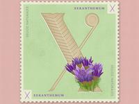 Letter X · Xeranthemum · #36daysoftype #SellosNaturales