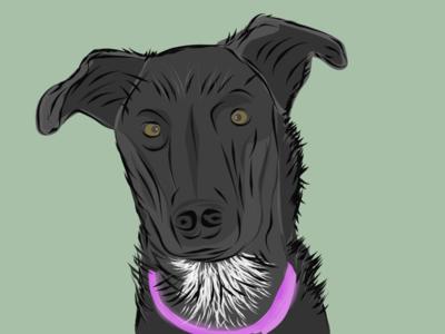 Lizzy Dog
