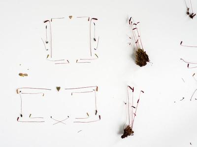 Mossy Logo Frames moss sporangia square rectangle organic
