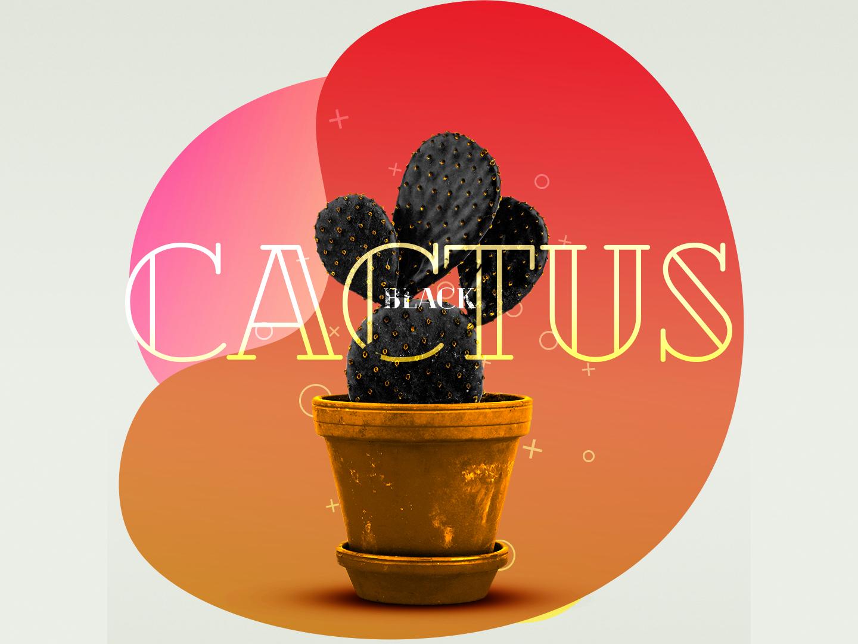 Black Cactus art photo adobe photoshop cc adobe photoshop