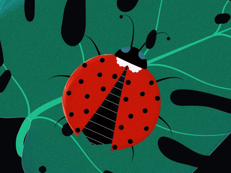 Ladybug illustration graphic design vector art vector illustration vector artwork illustration design adobe illustrator ladybug