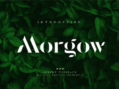 Morgow Luxury Typeface fashion alphabet sample hand font awesome newspaper web font elegant fonts fonts collection font design elegant bold modern calligraphy logo lettering fonts font typeface luxury