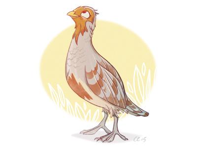 Partridge Dribb sketch partridge character design bird