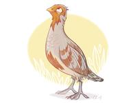 Partridge Dribb