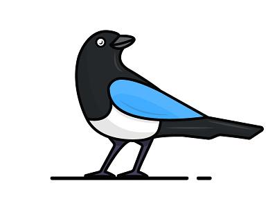 Magpie vector. illustration
