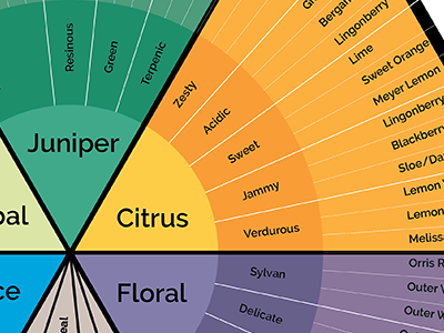 Gin Tasting Diagram design infographic tasting