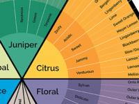 Gin Tasting Diagram