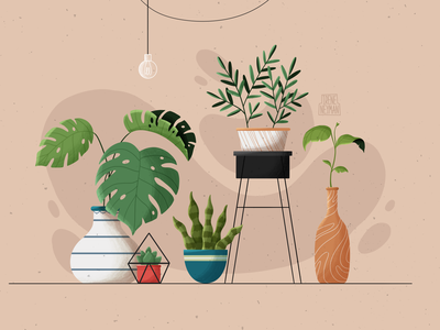 Plants flower monstera home design home interior decor leaves plants plant colorful web minimal vector graphic design flat design illustrator art illustration