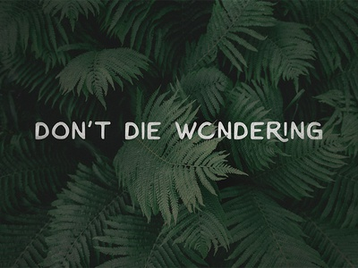 Don't Die Wondering nature lettering quotes typography type