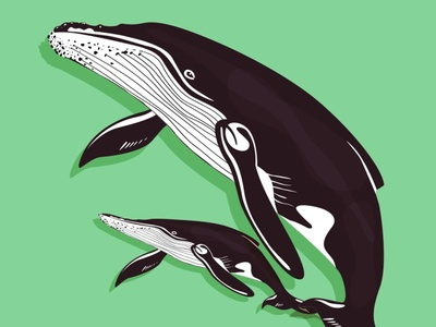 Baby whale with mom vector illustration design flatposter flatdesign