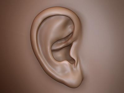 Ear 3d zbrush ear sculpt bust head