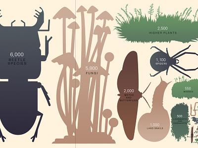 Endemic New Zealand species infographics illustration