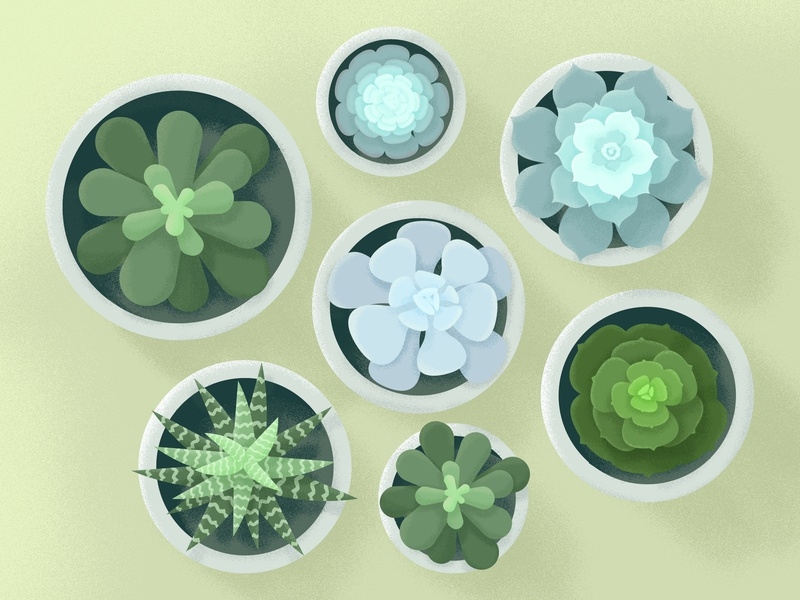 Spring Succulents illustrator plants pots spring succulents