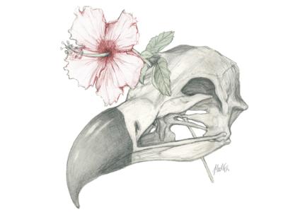 Vulture Flower drawing illustration