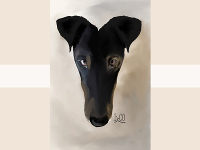 Smooth Fox Terrier by IxCO