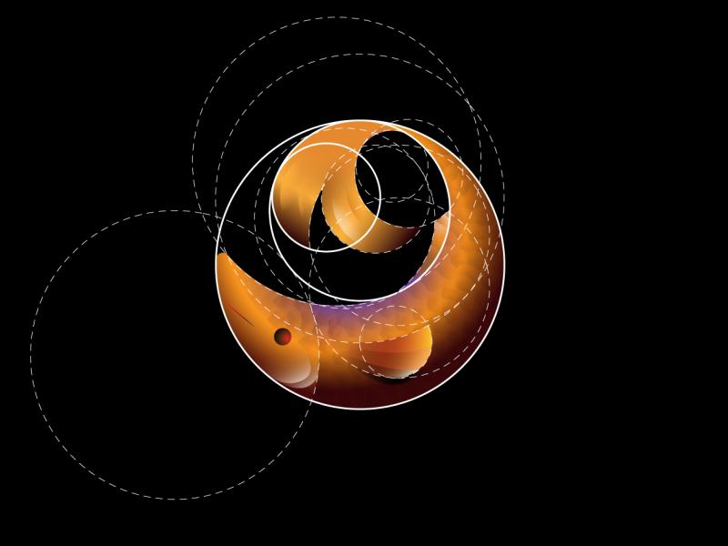GoldenSea Logo color logo gradients logo gradient 3d logo gold logo 2019 logo portfolio animal logo ocean logo grid golden ratio fish sea golden logo design