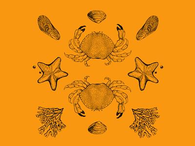 Symmetry of Nature P.1 label design branding brandidentity cannabis branding cannabis packaging nature art procreate art ocean life sealife coastal ocean illustration