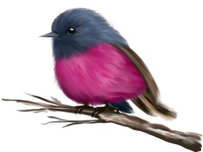 Pink Robin Bird digital illustration digitalart digital art dribbble color illustration redraw pink robin bird adobe adobe fresco