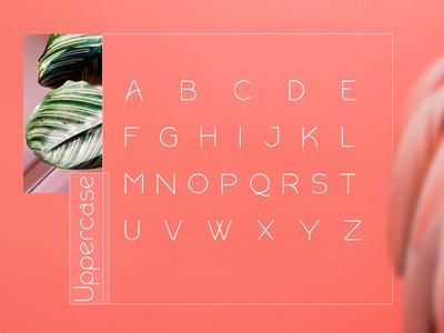 Uppercase Rollgates Modern Sans Font