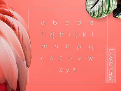 Lowercase Rollgates Modern Sans Font design typography