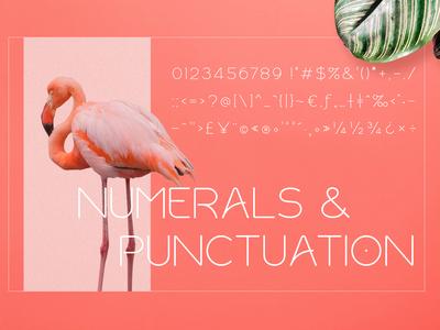 Numerals & Punctuation Rollgates Modern Sans Font
