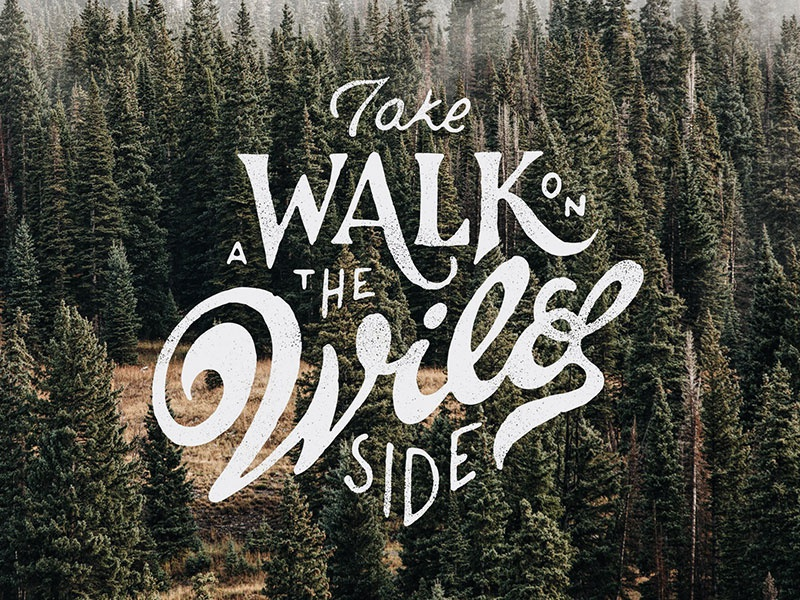Walk on the wild site script hand lettering design lettering typography type