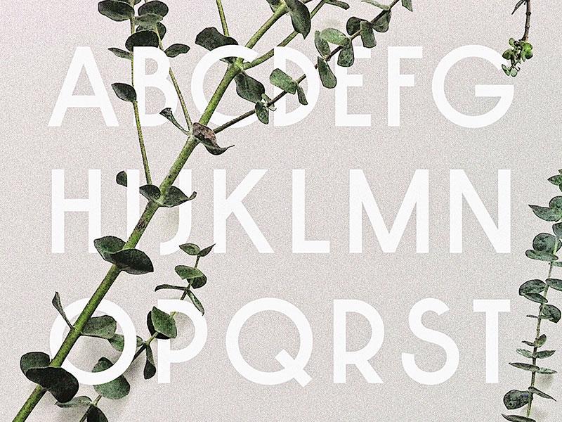 New Font Alphabet sale typeface type design font design font typography type