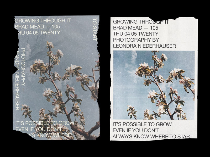 105 neue helvetica flower swiss poster swiss design swiss style swiss minimalistic minimalism minimalist minimal grow editorial layout print poster