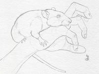 Rats: Night of Terror - Sketch
