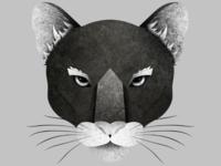 Wildcat illustration