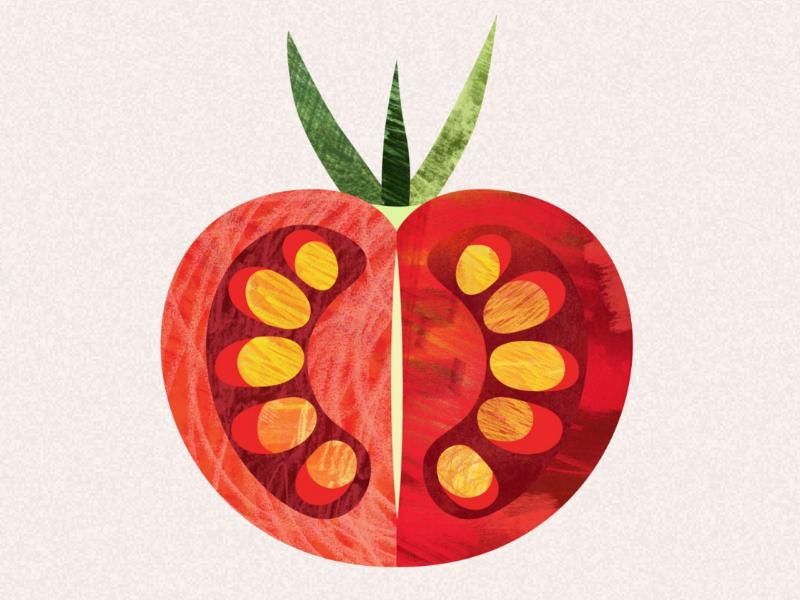 Tomato illustration flora floral texture vegetables botanical illustration tomato illustration