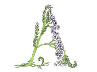 Herbarium Typography