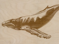Whale Etching