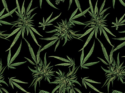 Cannabis Print digital illustration digital painting apparel design graphic artist illustration textiles textile pattern textile design art design cannabis cannabis branding pattern design pattern