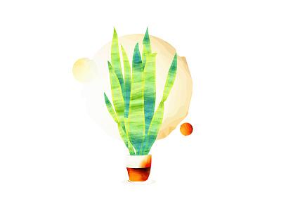 Sansevieria Snake Plant illustration :) watercolors botanical illustration drawing graphic design design sketch illustration adobe illustrator
