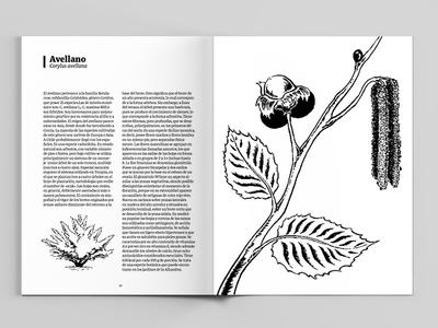 Scientific illustration for botanical catalogue