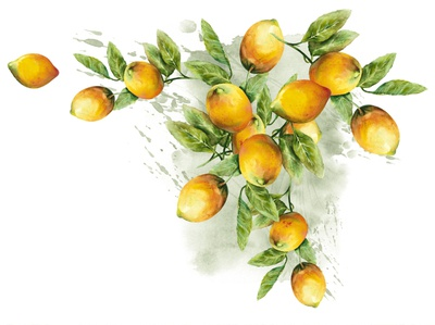 Watercolor Illustration of Lemons