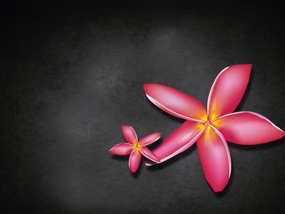 Oleander Flower 01
