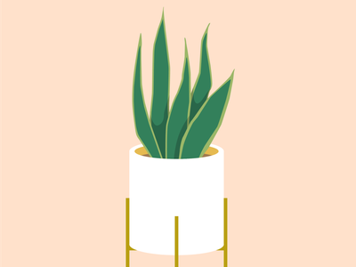 Sansevieria illust flat sansevieria plants vector design illustration