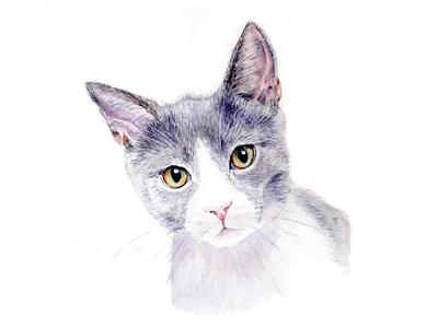Inquisitive Cat Watercolour