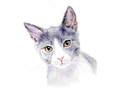 Inquisitive Cat Watercolour watercolor art watercolor painting cat animal watercolour watercolor