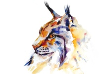 Watercolour Lynx